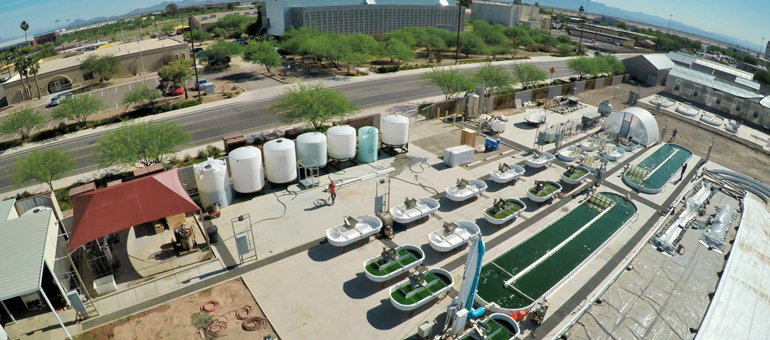 CSU to share in $3.5M algae fuels, byproducts study
