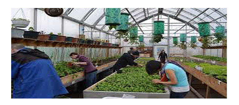 Greenhouse Capital Community launched to raise funds for indoor ag