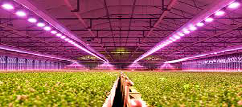 Navigant: Global horticultural lighting applications expected to reach $3.8B by 2027
