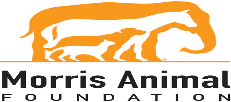 Morris Animal Foundation awards $1M for canine health research projects